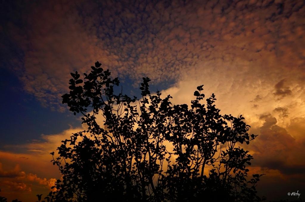 photo-arbre-pochette-1